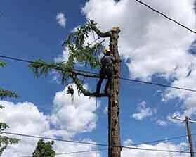 towntree tree Dangerous Work-1