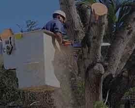 towntree tree Dangerous Work-3