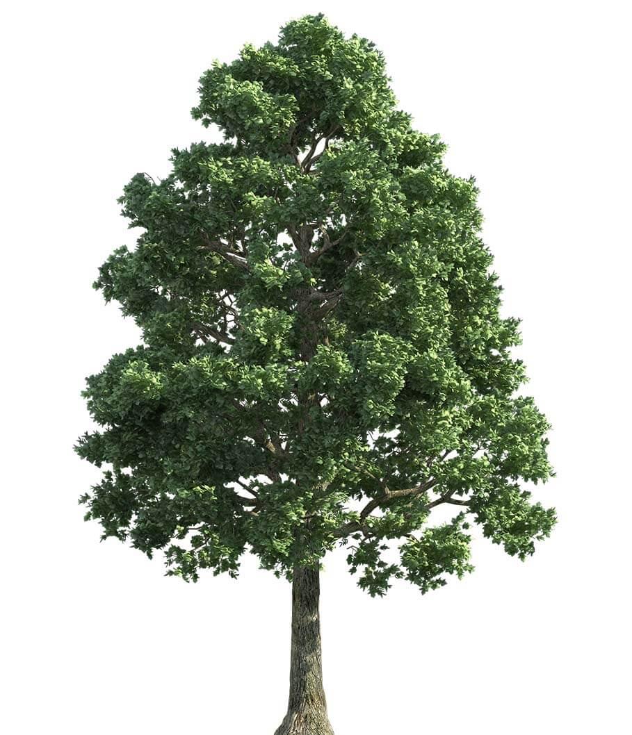 tree service image-2