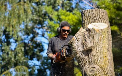 Prevent Damage from Trees this Season