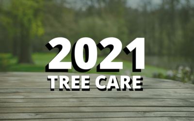 2021 Is the Year For Professional Tree Care!