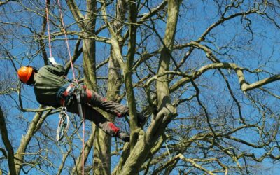 When Trees Have Needs: When to Call an Arborist