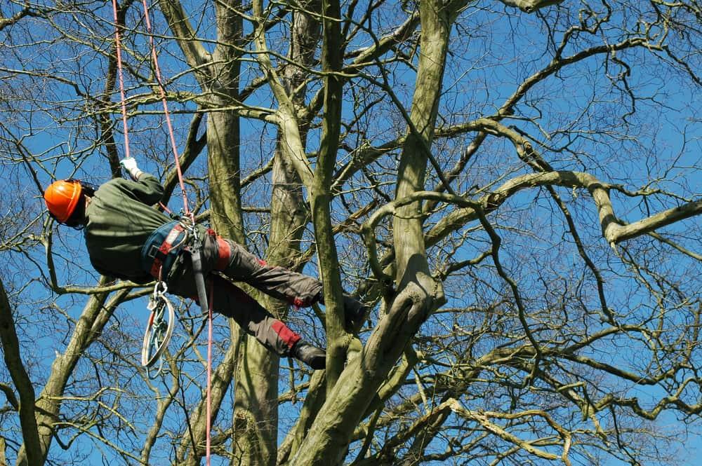 arborist-tree-care-service
