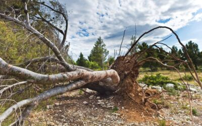 Tree Troubles? We've Got You Covered with Emergency Tree Services