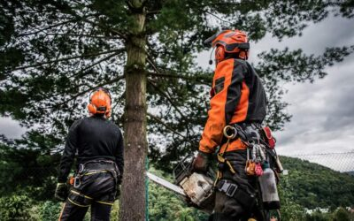 Selecting The Right Tree Service Company For You