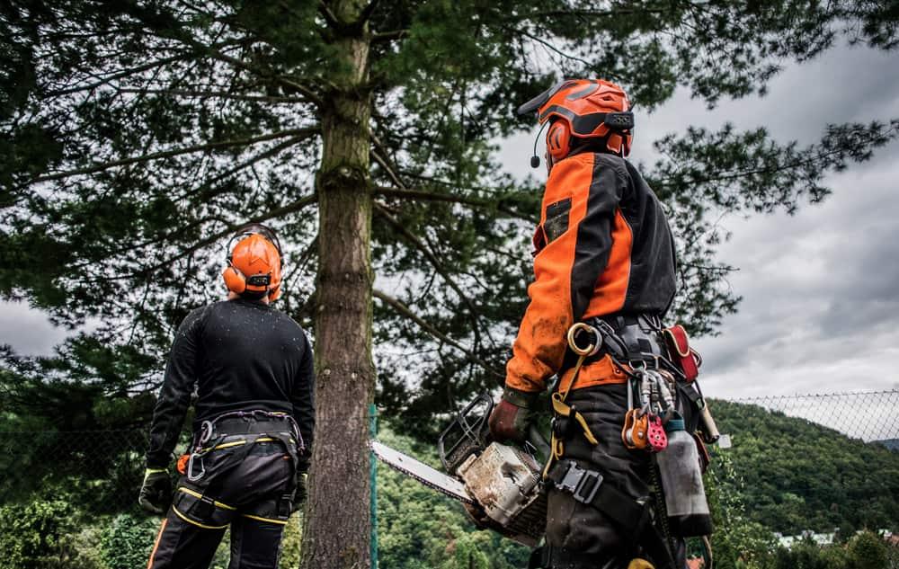 Choosing the Right Tree Service Company