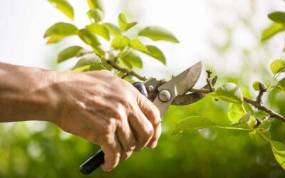 Ditch Risky DIY Tree Pruning!