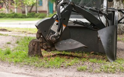 Stump Grinding Versus Stump Removal: A Comparison
